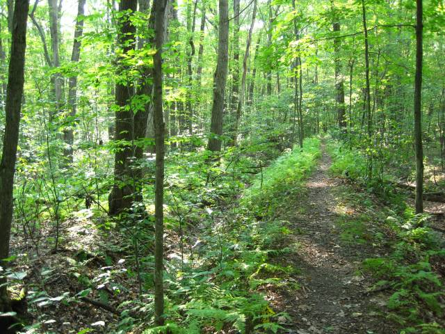 Bob's Woods, St. Bonaventure University, trail