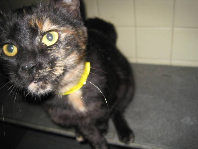 cat SPCA Cattaraugus County Sweetgum