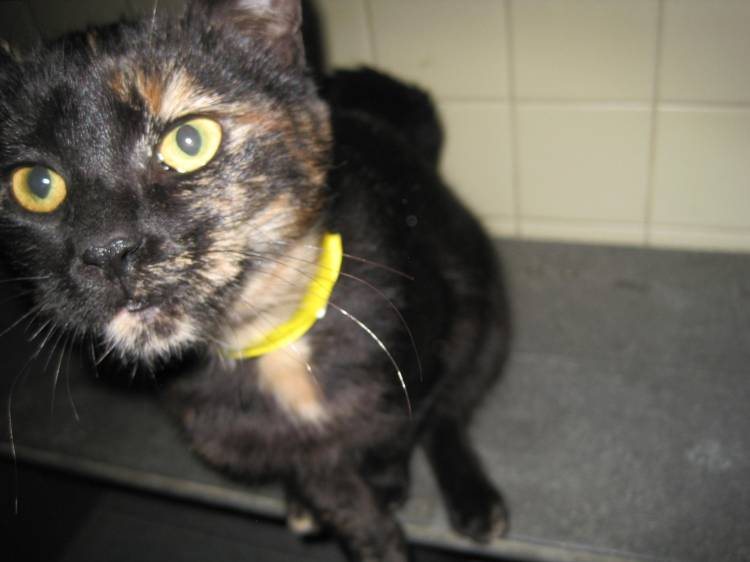 cat SPCA Cattaraugus County Sweetgum